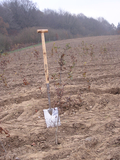 For the tenth time: Gollnest & Kiesel donates 58,000 trees for a new forest in Schleswig-Holstein